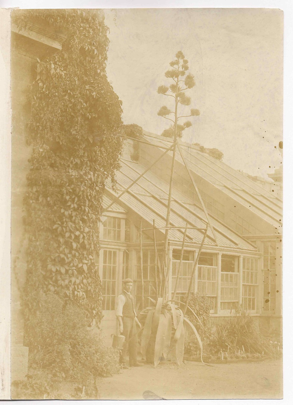 preview image for Photograph (?Early Gelatine Print) of an Exotic Tree Beside the Glasshouses at the Botanic Garden, Oxford, c.1880