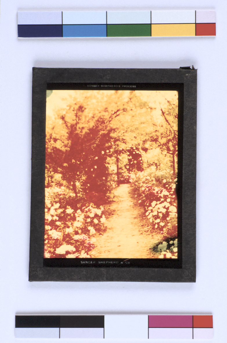 preview image for Colour Photograph (Sanger Shephard Process) of a Pathway between Flower Beds and Trees, Probably by W. A. Casson, 1900s