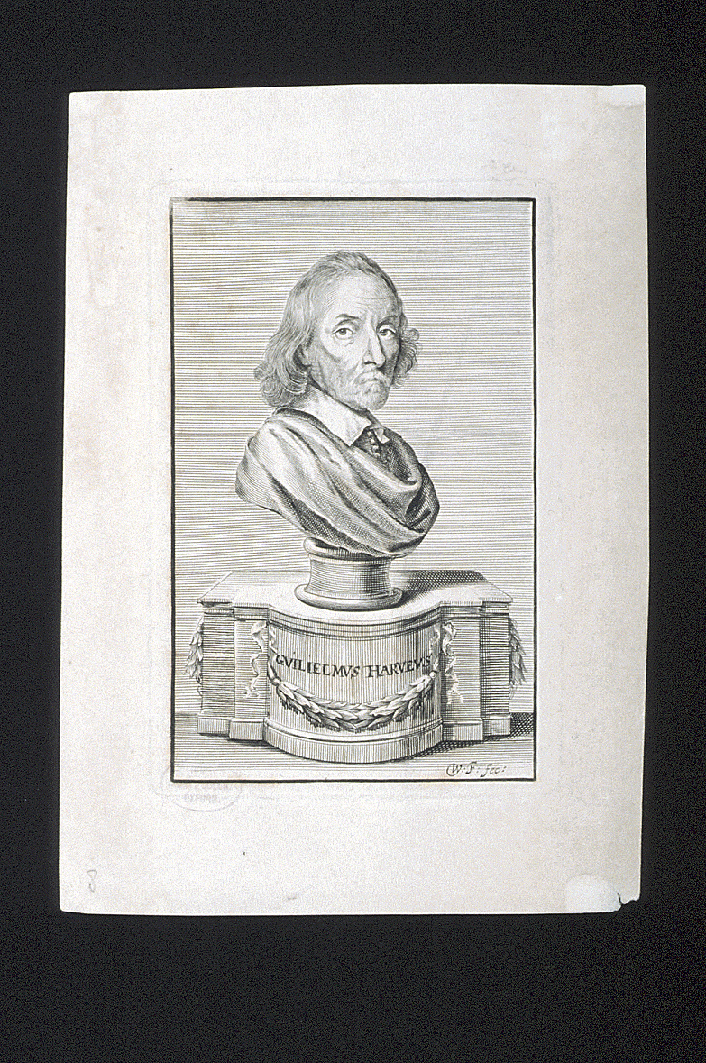 preview image for Print (Engraving) of William Harvey, Engraved by William Faithorne, London, 1653
