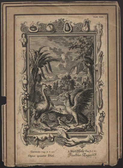 preview image for Print (Engraving) Genesis Cap. I. V. 20 Opus quintae Diei Funfftes Tagwerct, made by I.A. Fridrich, from Johann Scheuchzer, Physica Sacra, Germany, 1731