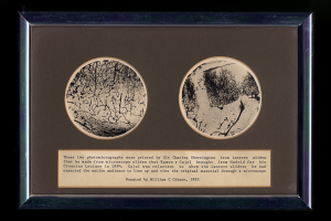 Photomicrographs of Cajal's slides, prepared by Charles Sherrington