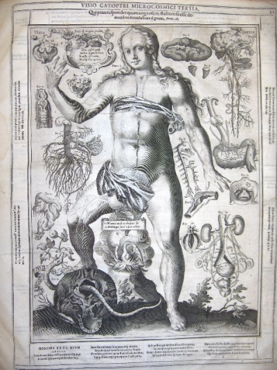 Early anatomy illustration from Johannes Remmelin, 'Catoptrum Microcosmicum' (1619)