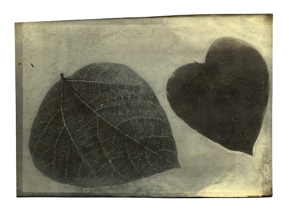 preview image for Photograph (Experimental Photogenic Drawing) of Leaves, by Robert Hunt, from the Photographic Experiments of Sir John Herschel, 1839